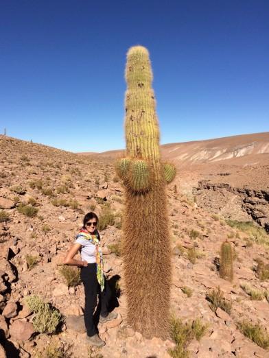 Day 37 Atacama desert (27)
