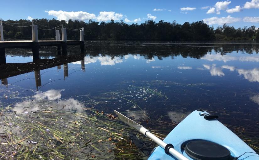Seagrass keeps more than dugongsalive!